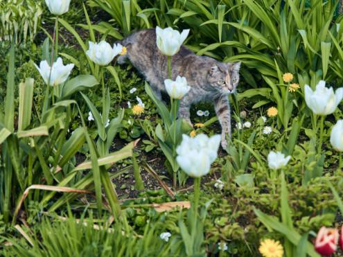 Сезонне озелення на території звіринцю зазнімкував Олег Міткевич