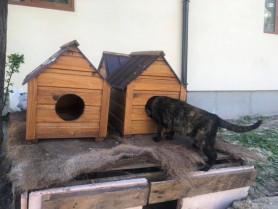 У Луцьку покрали будиночки для безпритульних котів