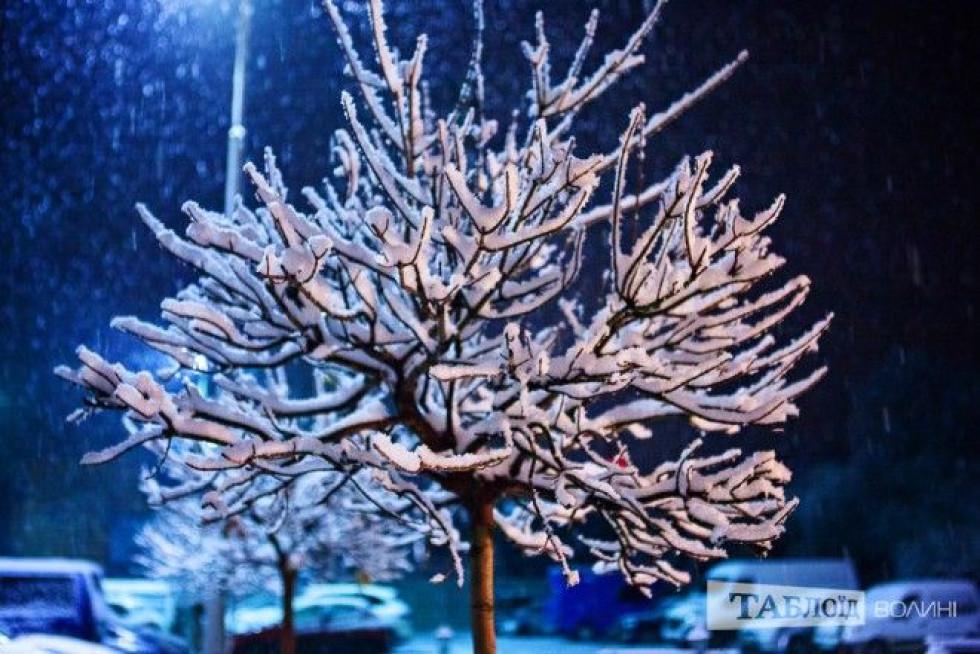 Сніг собою вкрив дерева у місті