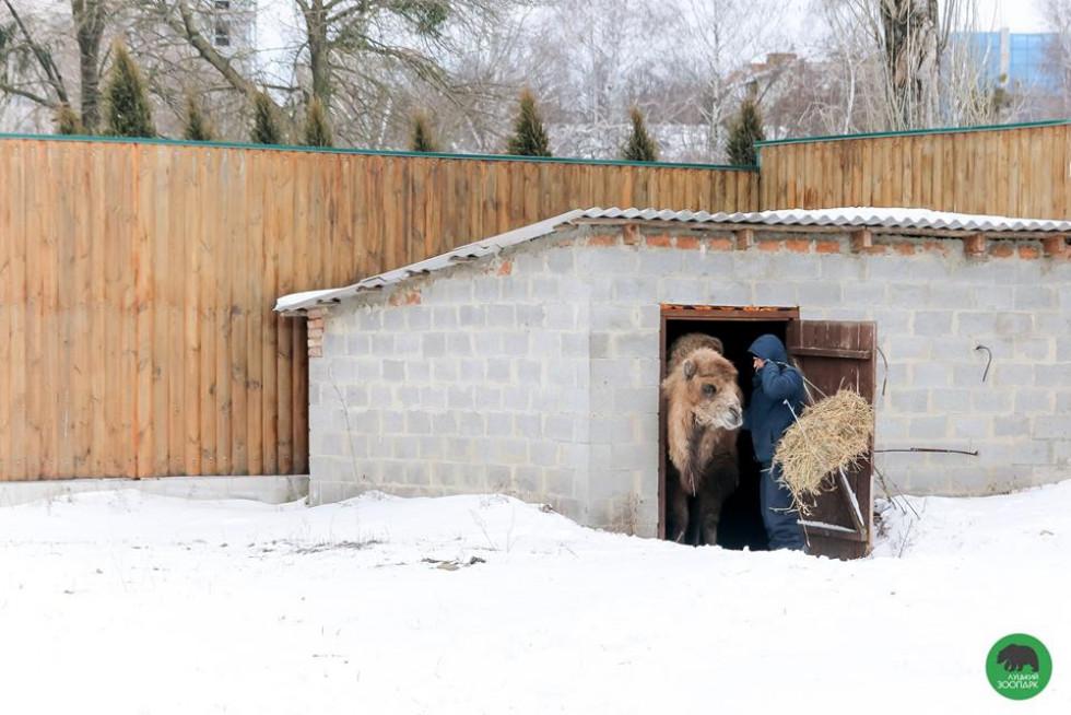 Засніжені краєвиди луцького зоопарку