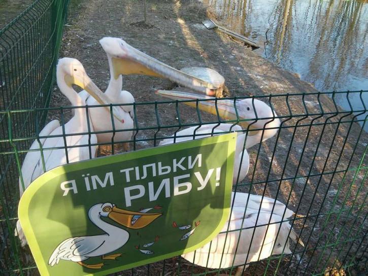 Пелікани в зоопарку