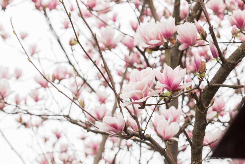 Приємні квіти ростуть високо на деревах