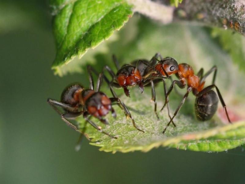 Комахи на світлині луцького фотографа