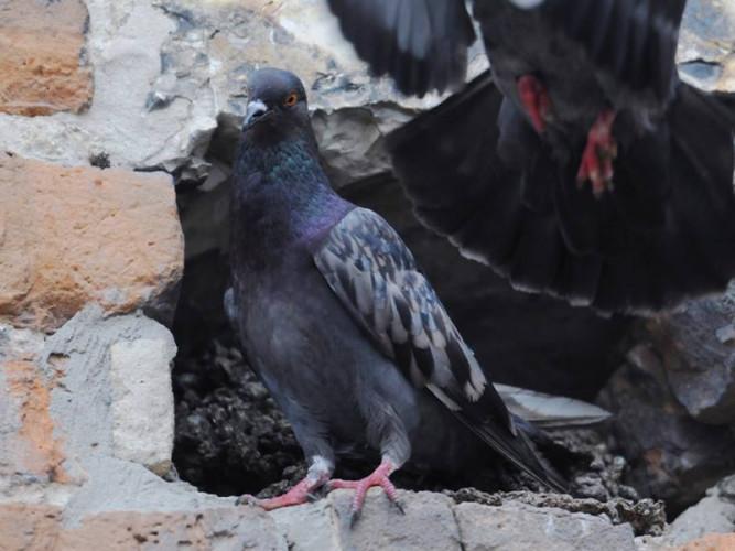 Птах у Луцькому замку