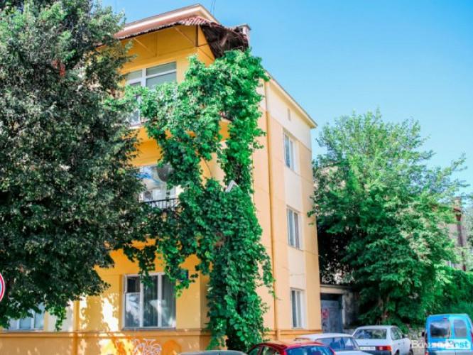 Один з луцьких будинків, облетений виноградом