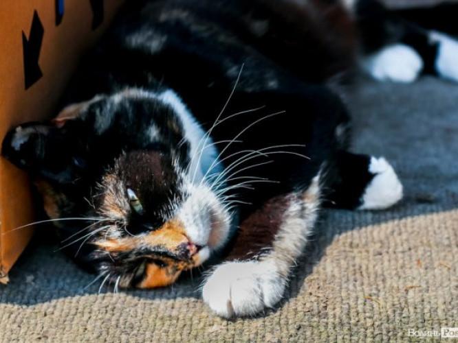 Котик ніжиться на сонечку в Луцьку