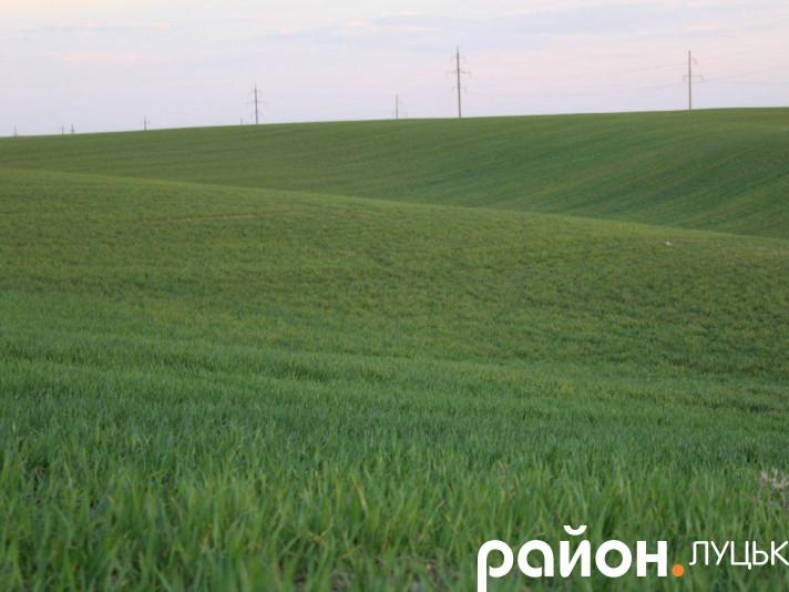 Intermеzzo по-великоомелянівськи: зелені поля на заході сонця
