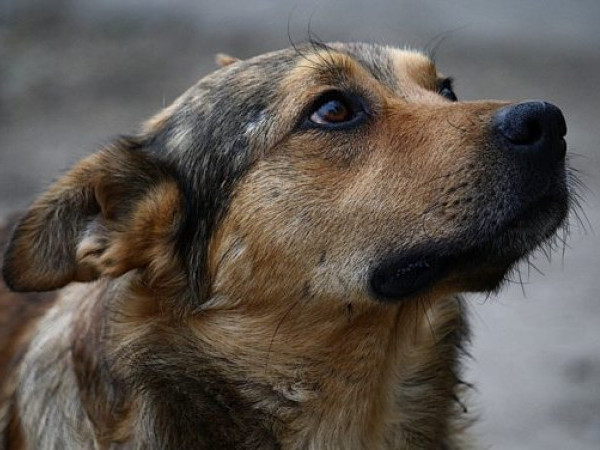 КП «Ласка» відловила на вулицях міста 102 безпритульні собаки