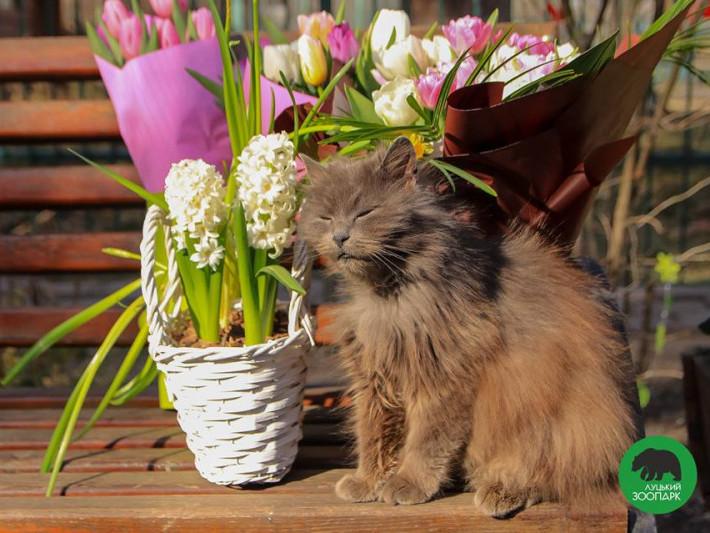 Луцький зоопарк запрошує помилуватися весняними квітами