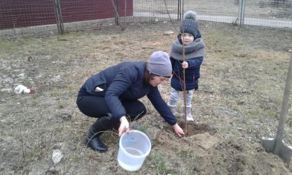 У Княгининівському дитсадку«Дзвіночок» висадили 26 фруктових дерев