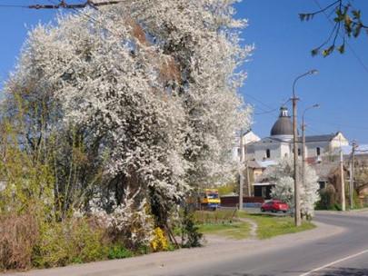 Волинський  фотограф зазнімкував квітневий Луцьк