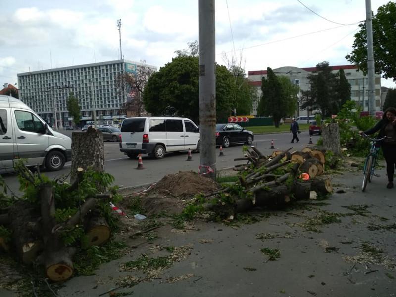 Вирубка дерев на вулиці Стрілецькій в Луцьку