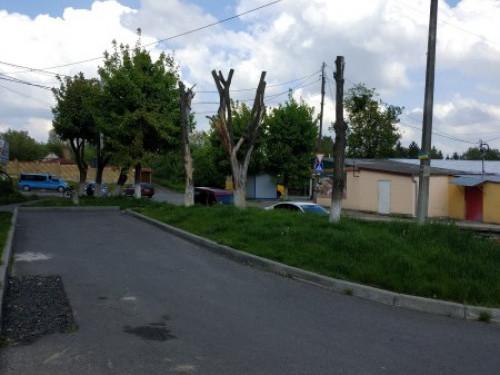 На вулиці Володимирській у Луцьку існує загроза падіння сухих дерев