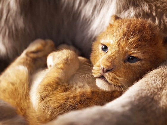 Кадр з трейлеру «Король Лев»