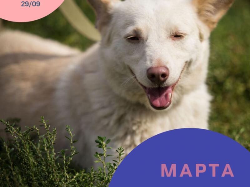 собака Марта, якій знайшли дім під час фестивалю