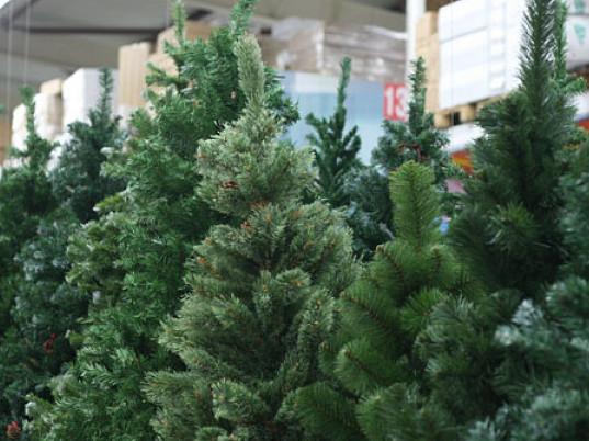 У Луцьку затвердили розміщення пунктів продажу хвойних дерев