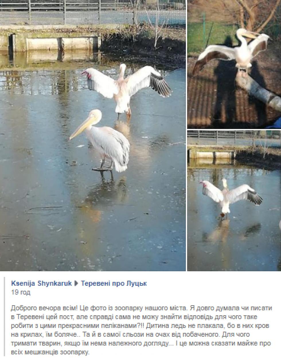 Інформація, яку поширила Ksenija Shynkaruk про Луцький зоопарк