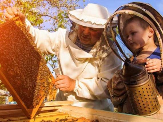 У Баївській школі дітям провели уроки бджільництва. Фото ілюстративне