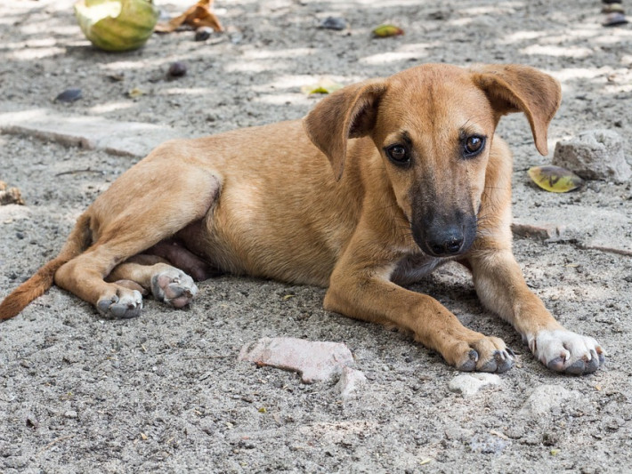 Поліцейські перевірять інформацію про стрілянину в собаку у Луцьку