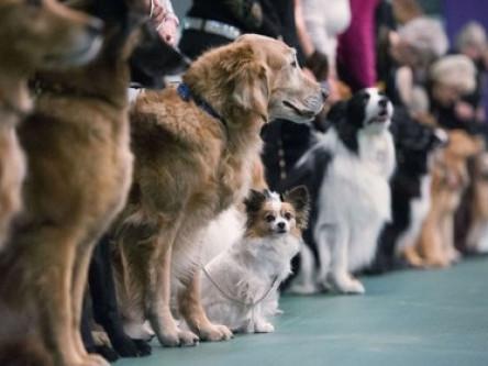 Лучан запрошують на виставку собак