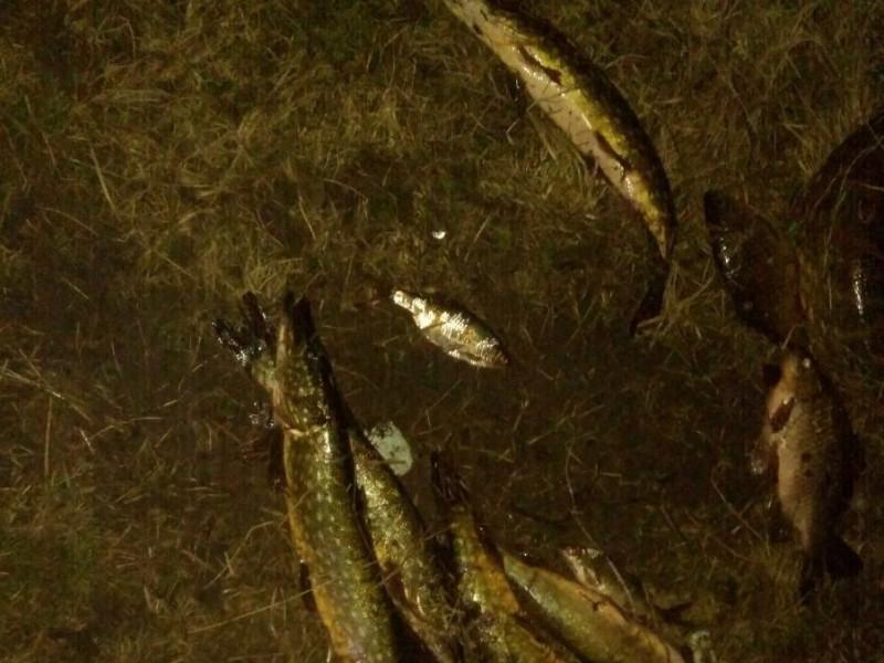 У Чарукові браконьєри кілограмами виловлювали рибу