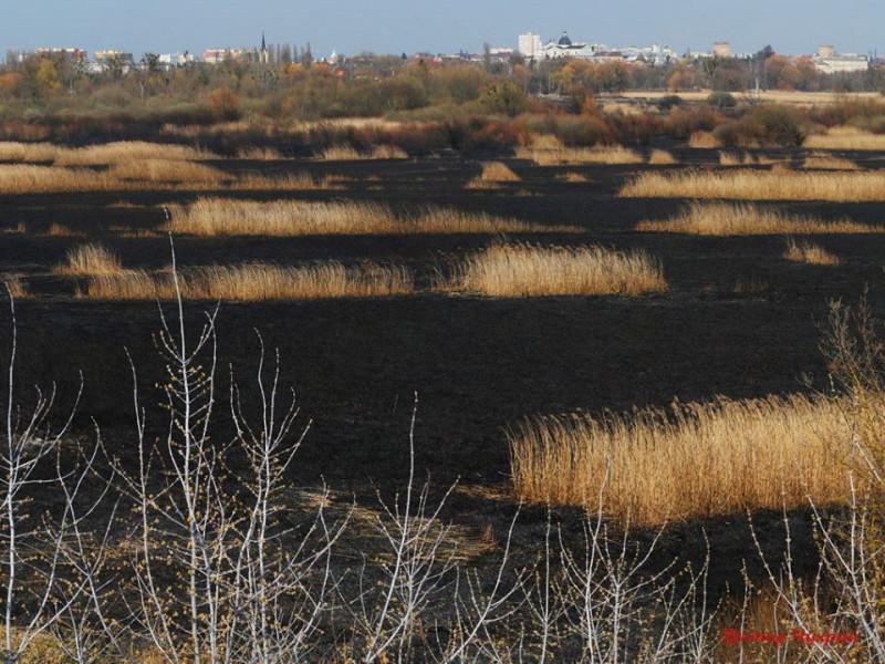 Як виглядає Гнідавське болото після масштабної пожежі