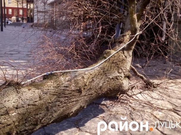 На Лесі Українки впало дерево