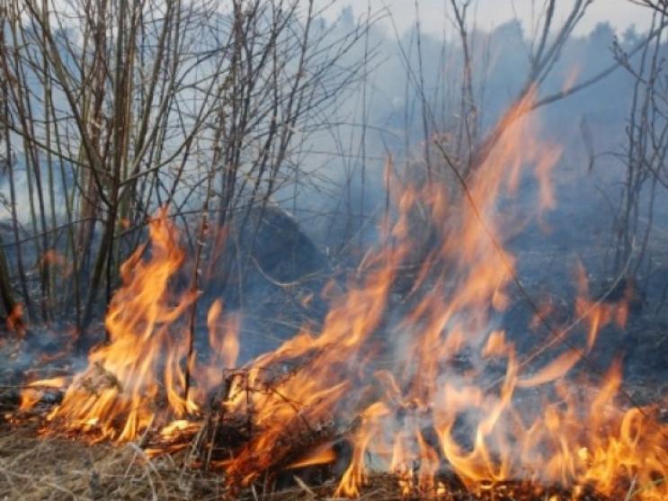 Біля села Рокині вигоріла суха трава