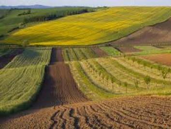 Державі повернули спірні земельні ділянки у Луцькому районі