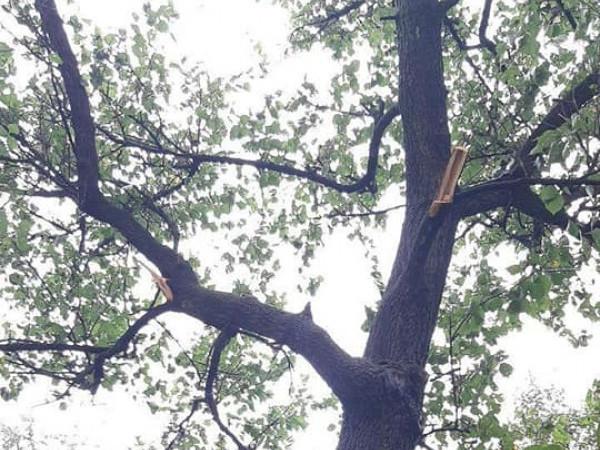 Пошкодили стовбур дерева