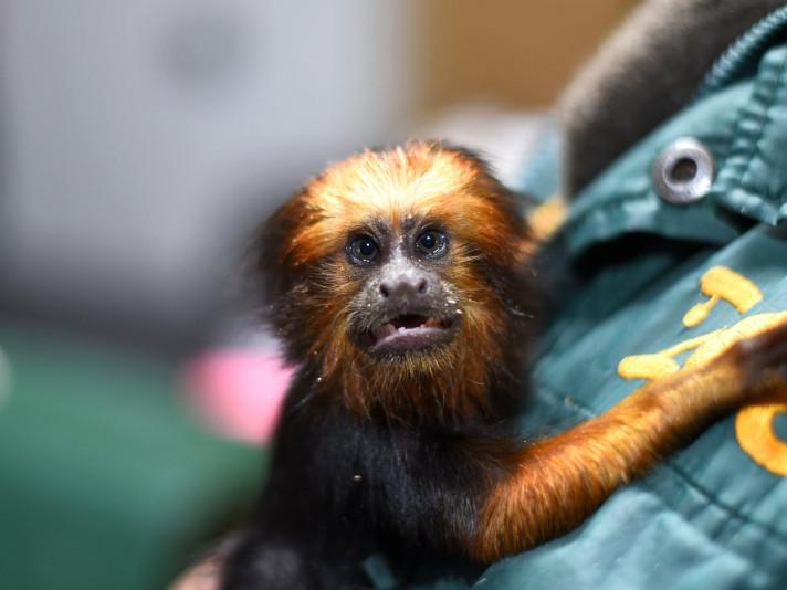 У Луцькому зоопарку з'явилася нова мешканка