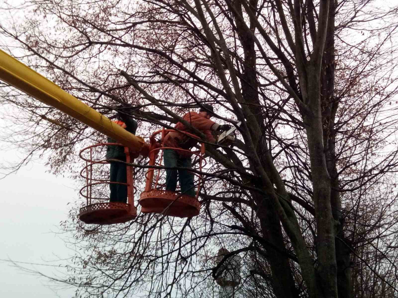У Воротневі обрізали дерева