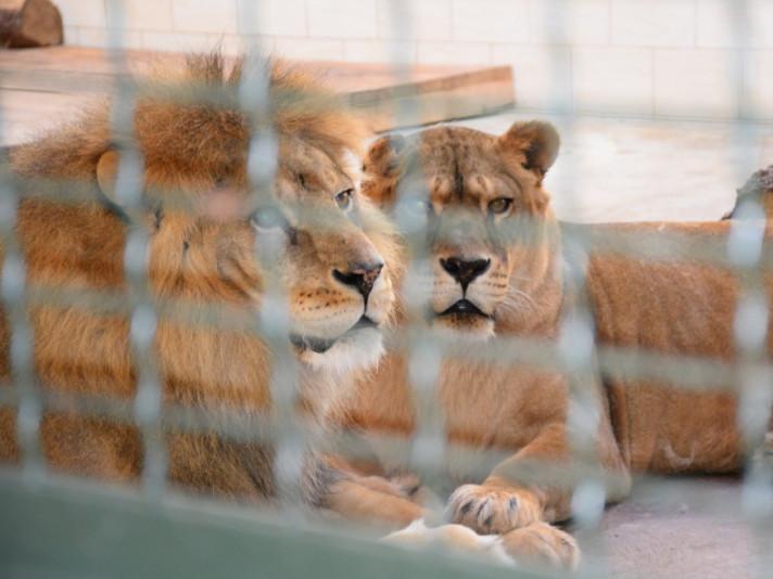Жителі Луцького зоопарку