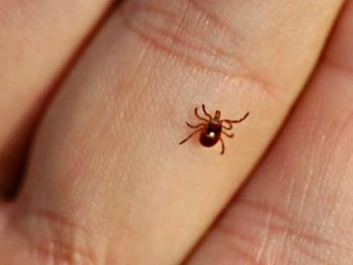 У Луцьку боротимуться з комарами та кліщами