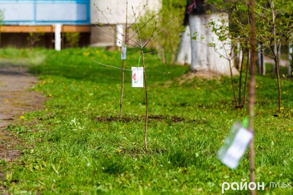 """Вишневий сад у дитсадку """"Радість"""" (ФОТО), фото-27"""
