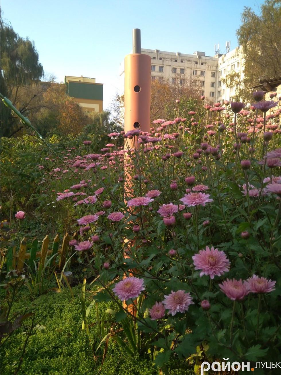 Квітники біля будинків