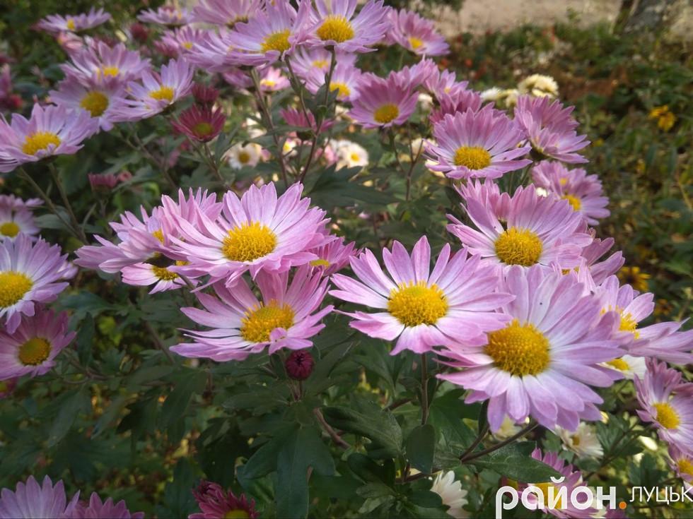 Квіти біля будинків