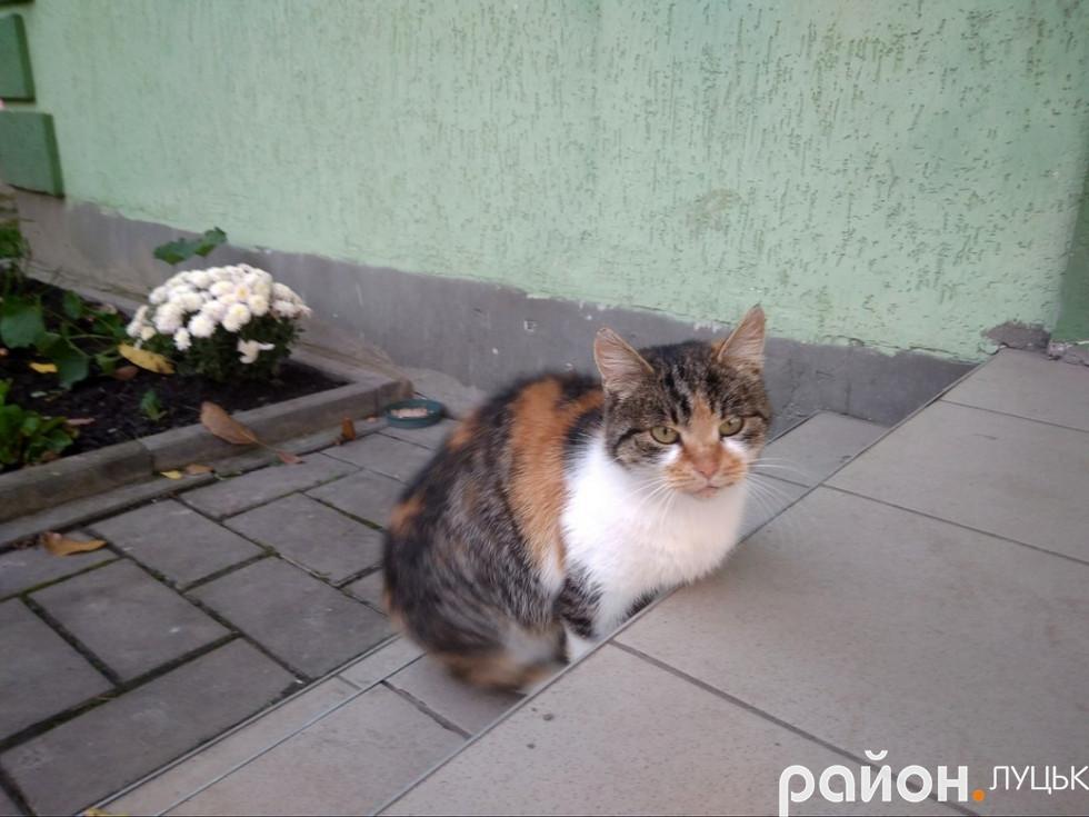 Котик, який мешкає у цьому дворі