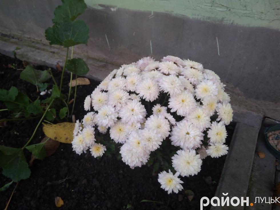 Мешканці посадили і квіти у дворі