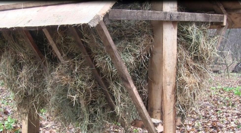 Сіно для оленів плямистих