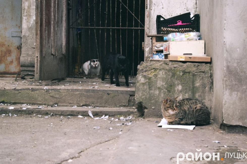 Коти у дворі
