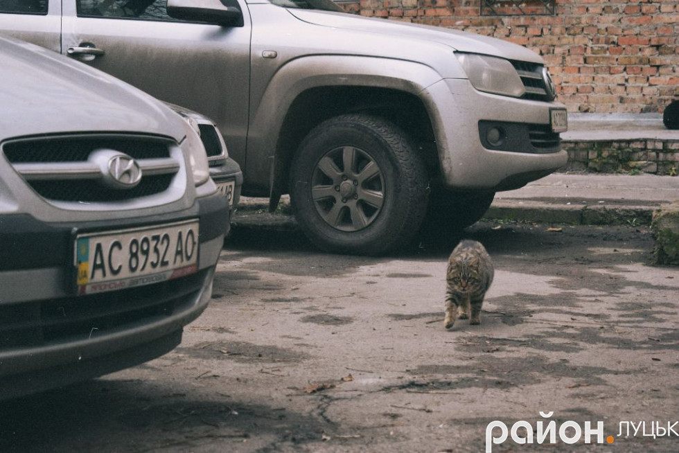 Котик у дворі