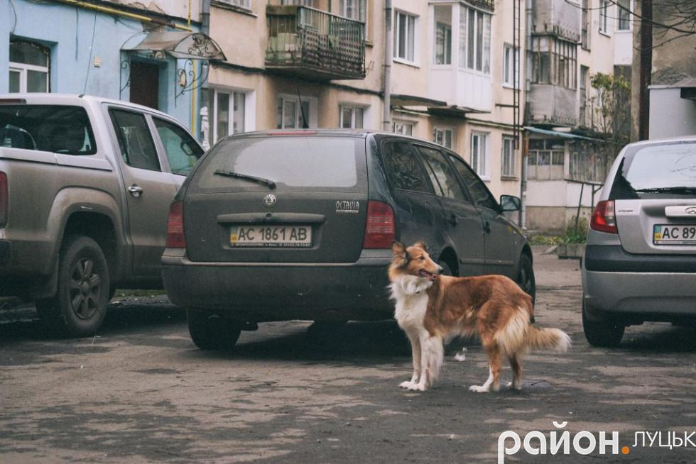 Собака «Джесіка»