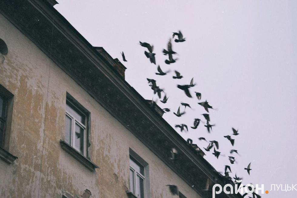 Голуби на даху