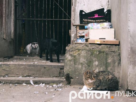 Котики у дворі на проспекті Волі