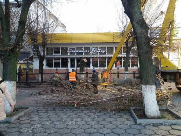 Знову ріжуть дерева