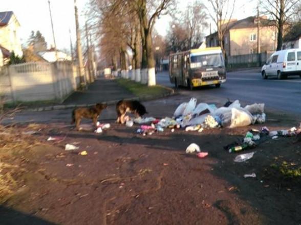 Львівська, сміття, собаки