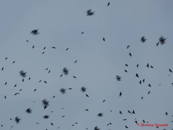 Птахи в небі