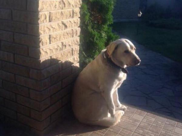 Лчани шукають собаку Яру