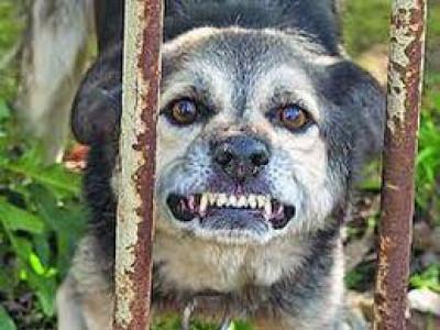 Безпритульний собака покусав хлопця